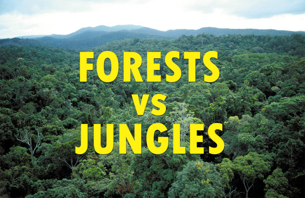 What is the Difference Between a Forest and a Jungle?